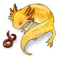 Golden axolotl and a worm by Morrison3000