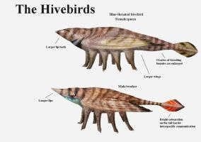 REP: The Hivebirds by Ramul
