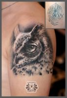 cover with owl by Karviniya