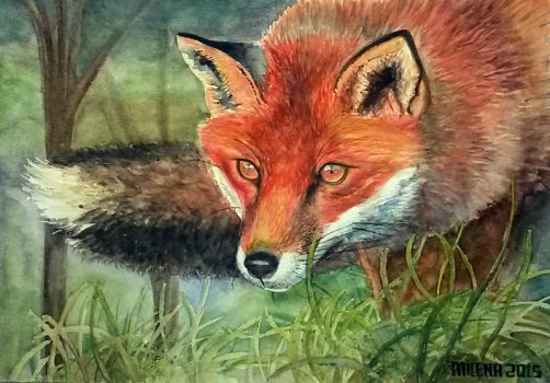 Water colour Red Fox by milesboard