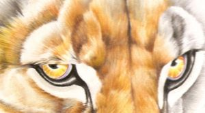 Smilodon Sneak peak by LyrebirdJacki