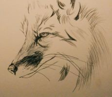 Biro Fox Drawing (Ongoing) by CharliexAnne