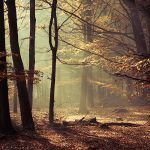 Shelter by Oer-Wout