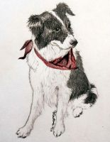 Jake the Border Collie by Destiny-Carter