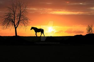 Horse Silhouette At Sunset by twilliamsphotography