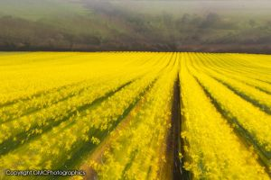 Yellow Burst by GMCPhotographics