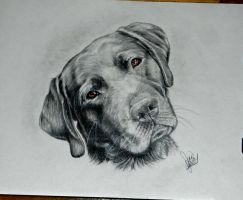 Shadow the lab by winstonscreator