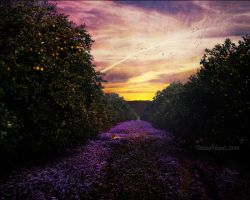 Lavender Lane. by TwistedHearts