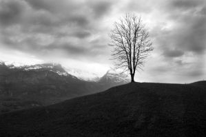 Lone Tree by mikechro