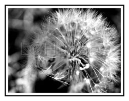Poof by lehPhotography