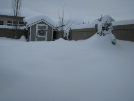 Winter Storm 2010 by Sydney161