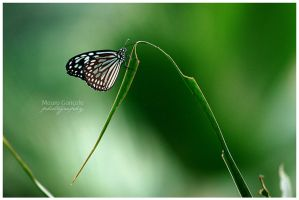 Wings of Paradise by mauro-goncalo