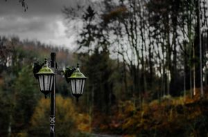 Bad Weather Dark Forrest by YoloSwagPhotography