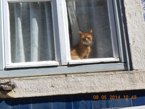 Window Cat by ERICA29091999