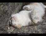 Cute cat by ClairutPhotography