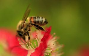 Bee Pollination Up Close by Coraloralyn