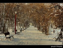 winter in park... by Iulian-dA-gallery