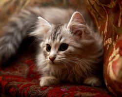 Siberian Kitten no. 4 by Mischi3vo