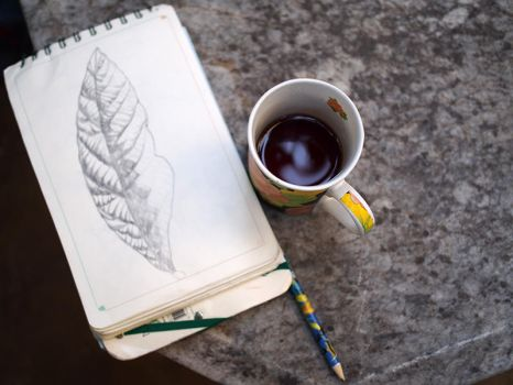 leaf drawing and tea by alexiacortez