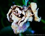 Holding On Until The End by AngelaLeonetti
