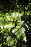 A Hole in the Understorey by EarthHart