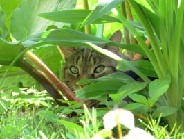 Hidden For The Prowl by Kitteh-Pawz