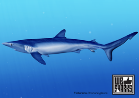 Blue Shark by omnicogni