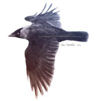 Flying Jackdaw by makangeni