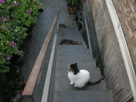 Cats On Stairs by kErstinR