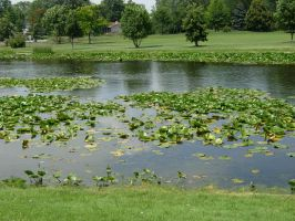 104 - pond by WolfC-Stock