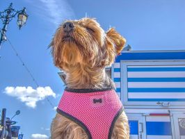 A Dog I met Today 2 by Bazz-photography
