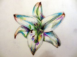 Lily Flower by EmilyMacArt