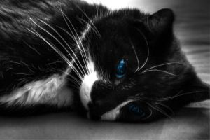 thoughtful blue eyes by PhotoForever88