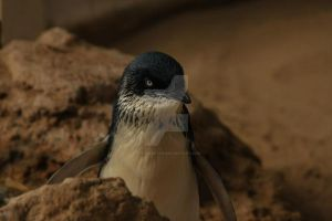 Little Penguin by emeraldeye14
