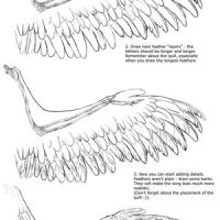 Wing Drawing Tutorial by Apsaravis