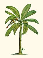 Banana Tree Botanical by joeyartist
