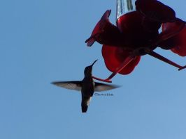 hovering by millie369