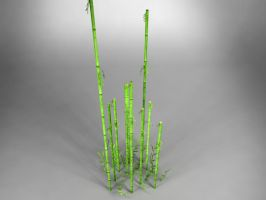 Bamboo 3d Render by Atzero