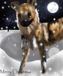African Wild Dog Christmas by safriatiger