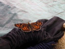 Butterfly 2 by GodessFae