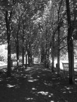 Row of trees by jimmyselix