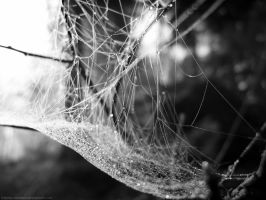 Spiderweb by pitchblacknight