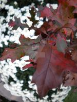 Red and White by lilmissa103