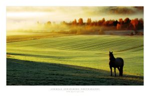 Above the Mist by Stridsberg