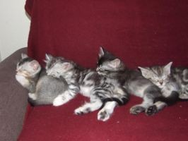 Line up for a cat nap by Isisneferet