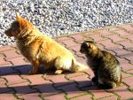 Dog and cat by a-groszek