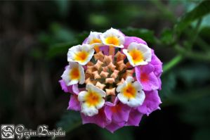 Flowers within a flower by Muhammed-Jetimi