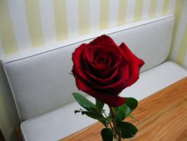a rose by Lily-Marie