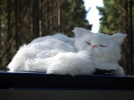 kitteh sleepz on ford by BrendanR85