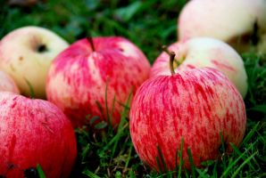 Apples by emshh